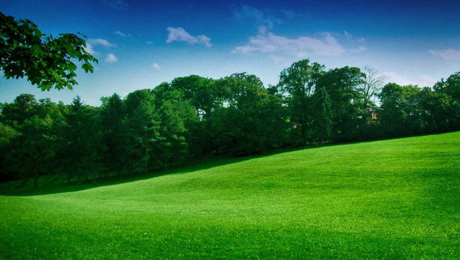 Cmrok Meadow