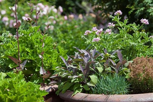 Top 5 Mediterranean Plants
