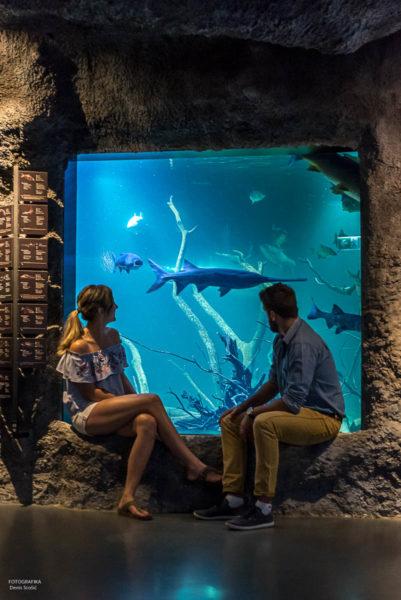 Aquatika Aquarium