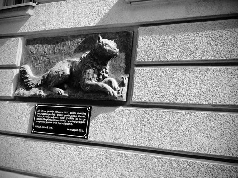 Pluto – the most famous dog in Zagreb